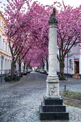 Heerstraße (Bonn)